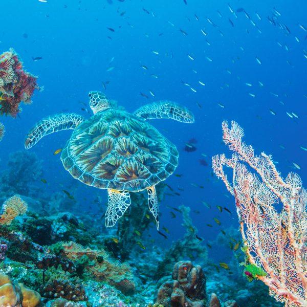 Seeing a turtle underwater - Blue Safari Seychelles
