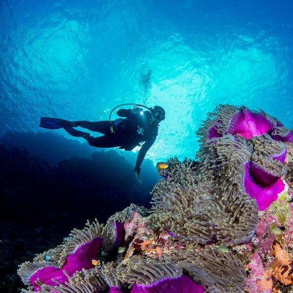 A diver looking at the luminescent colors of the corals at night