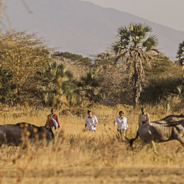 Taking a brisk walk with the Maasai through the plains of Chem Chem Wildlife Management Area