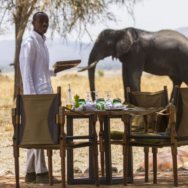 Elephant joining lunch at Little Chem Chem