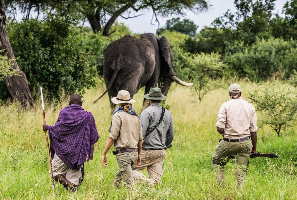 Guests looking at an elephant while on a walking safari with a guide