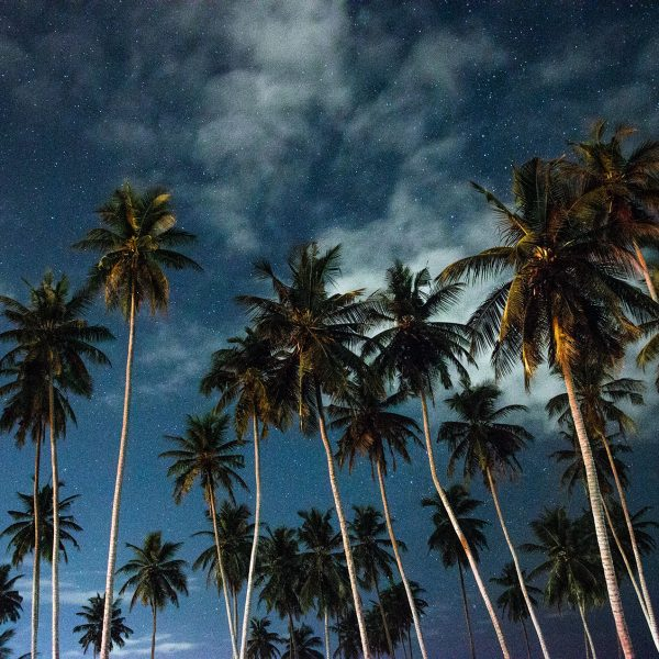 Tall palm trees against the night sky, filled with stars