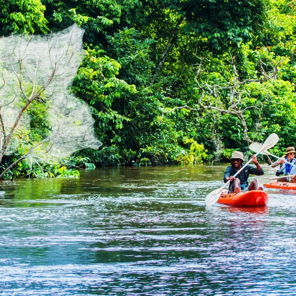 Guides and guests kayak through the rivers