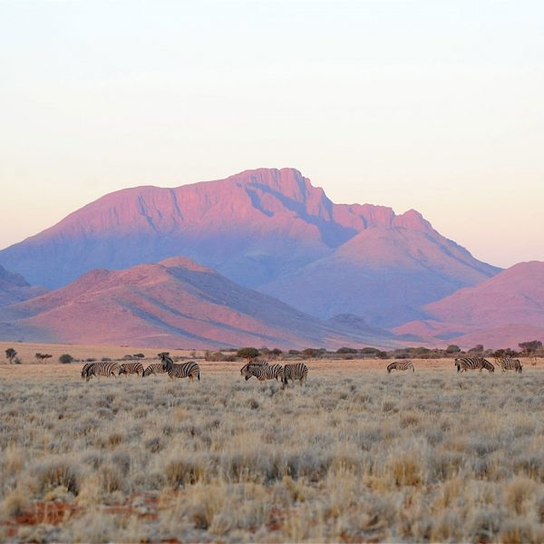A dazzle of zebra on the plains below the sun-lit mountains