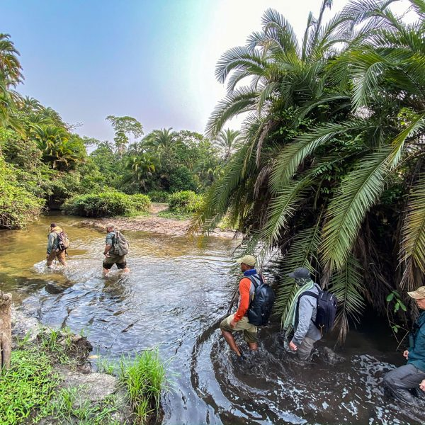 Guides and guests wading through knee deep waters in the Congo Basin